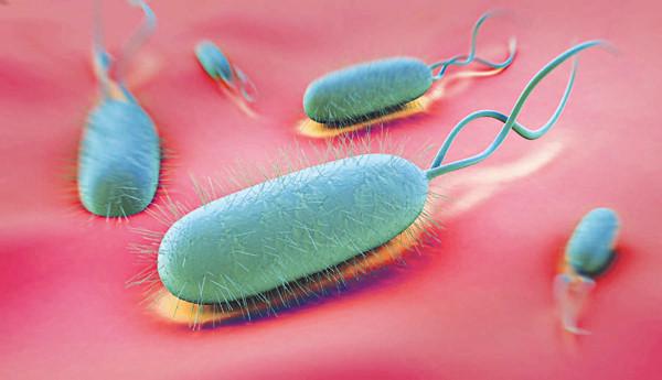 Vi khuẩn H.polyp - nguyên nhân gây ung thư dạ dày