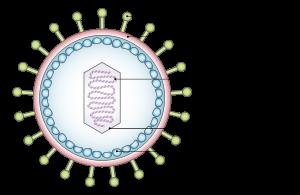 Virus Epstein-Barr