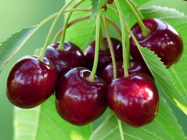 Quả Cherry rất tốt cho người Ung thư vú